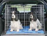 Перевозка животных из России в Беларусь