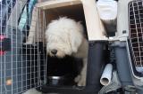 Зоотакси для перевозки собак