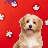 Канада анонсировала новые правила ввоза собак